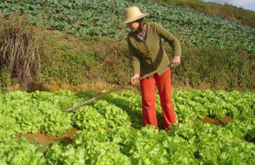 PFDC e entidades alertam para prejuízos a trabalhadores do campo
